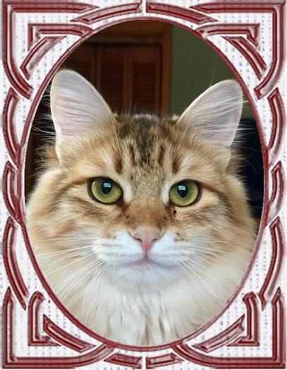 three color cat